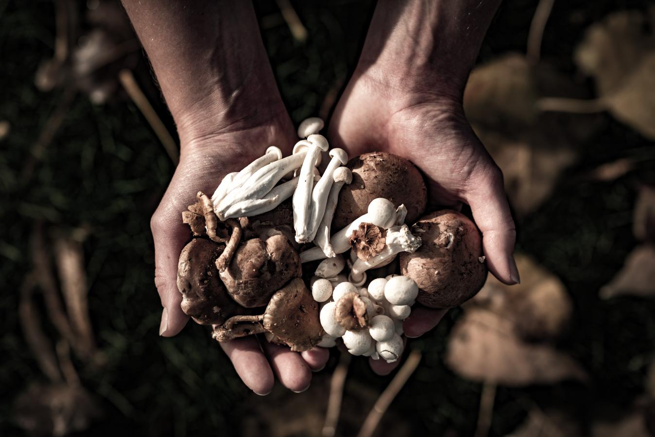 paddenstoelen herfst bos